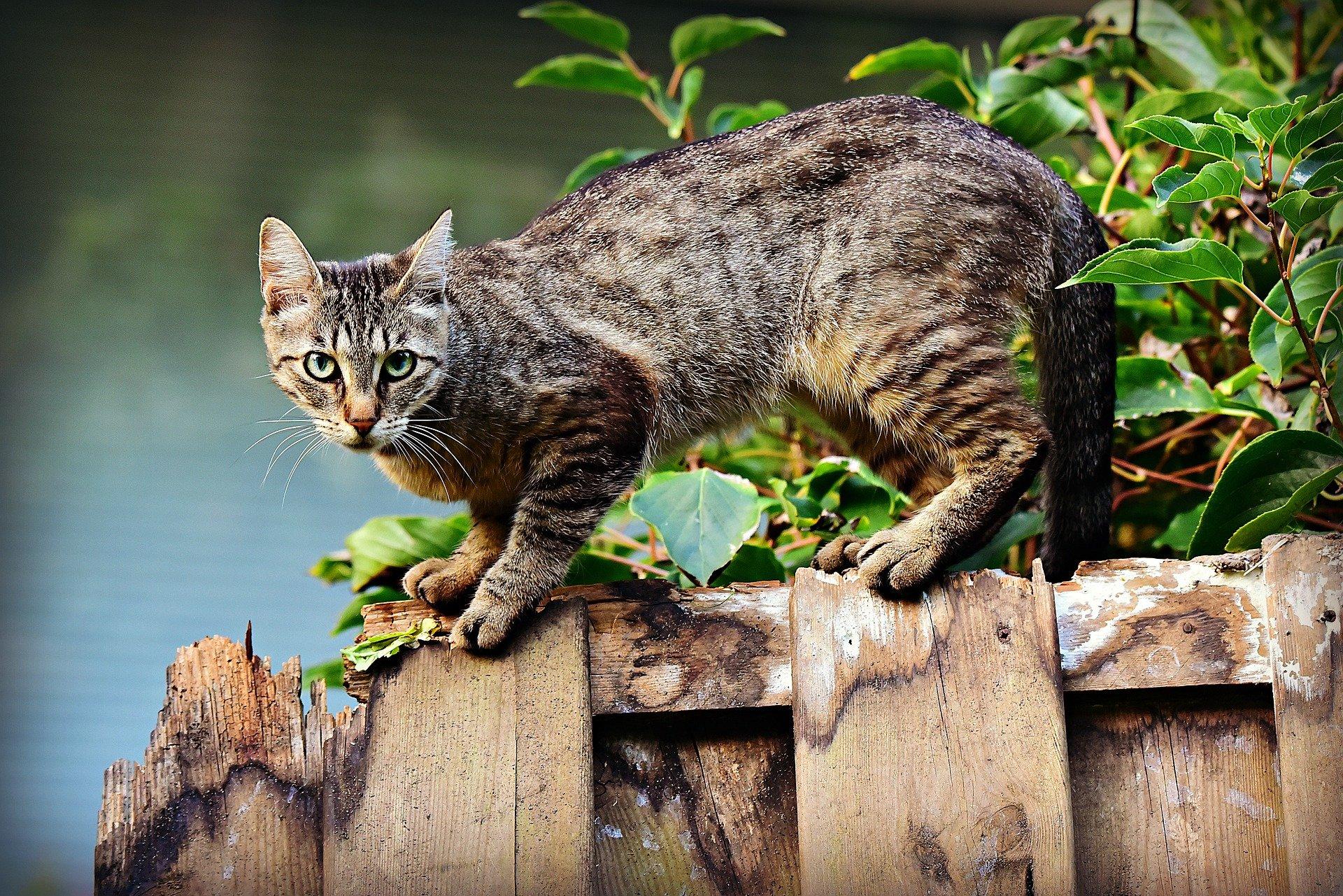 chat qui retrouve sa maison