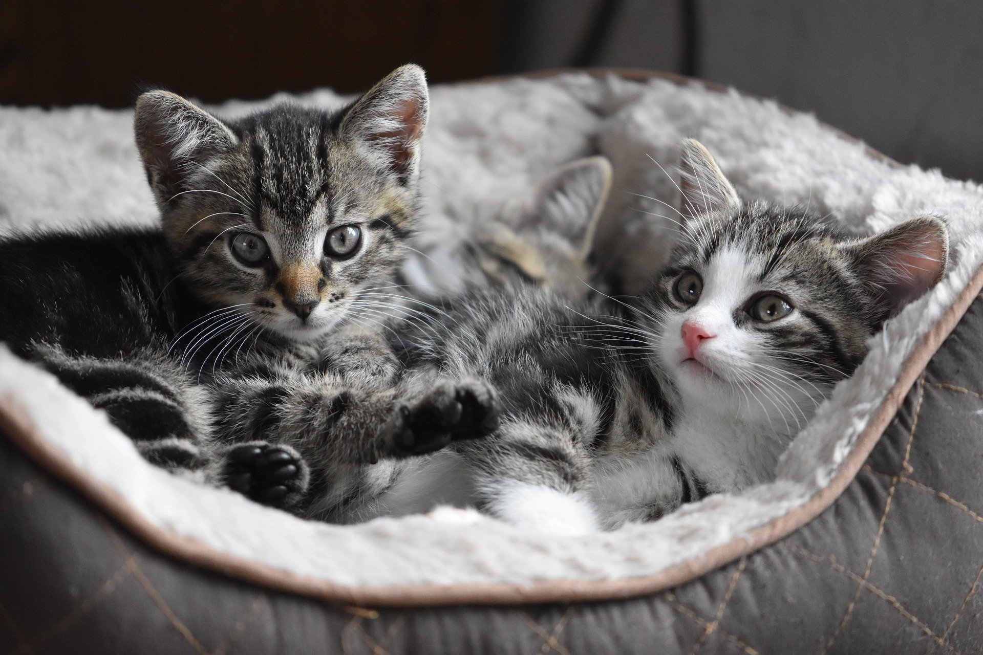 chat mâle ou femelle