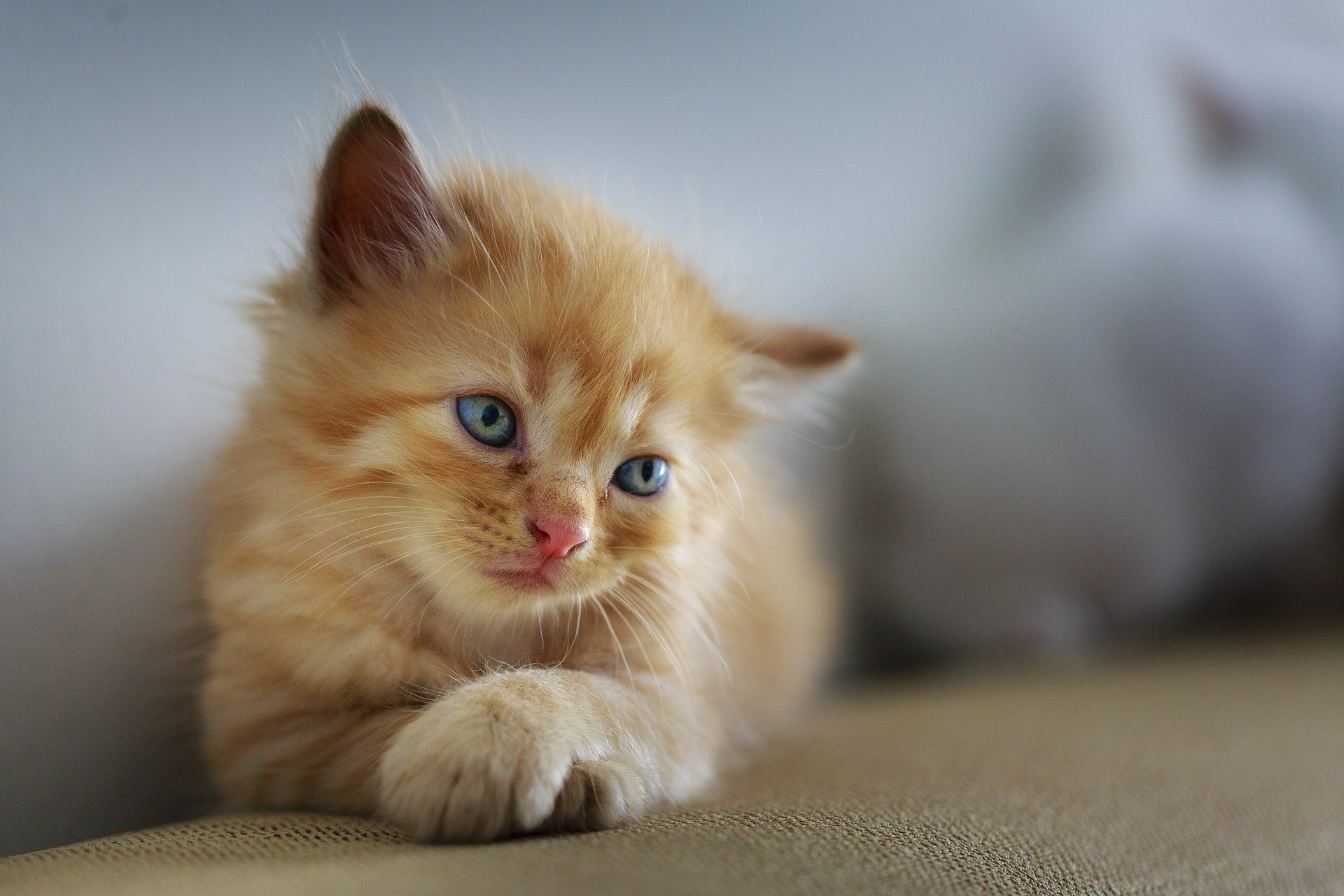 chat à donner