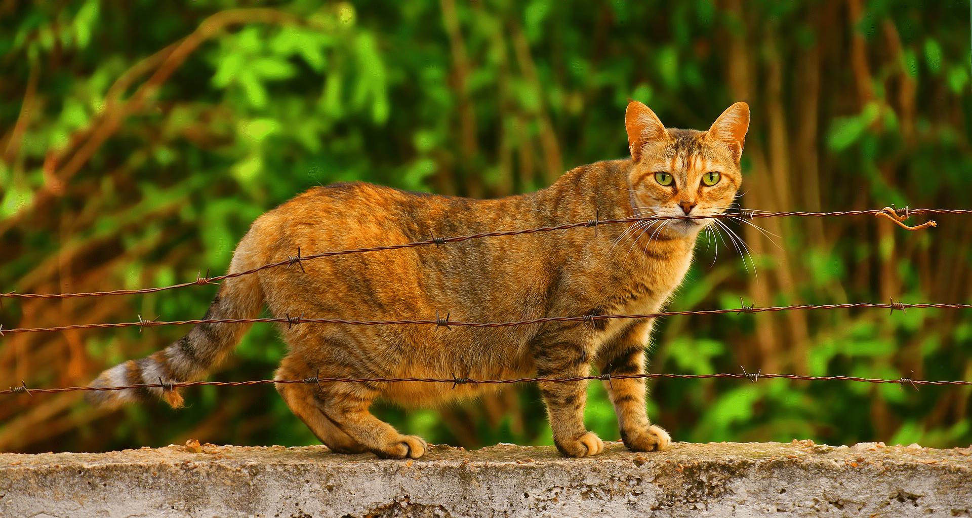 chat enceinte