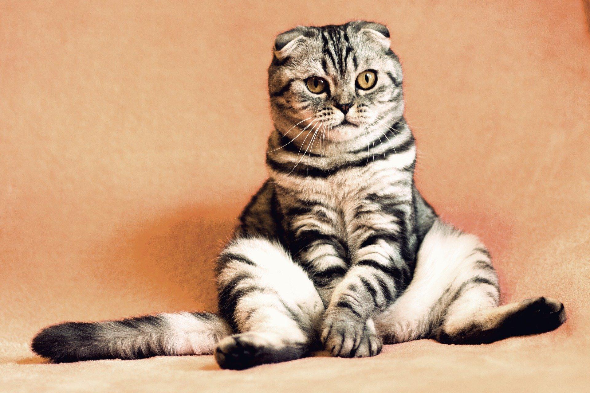 chat qui a la diarrhée